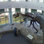 museum-of-natural-sciences